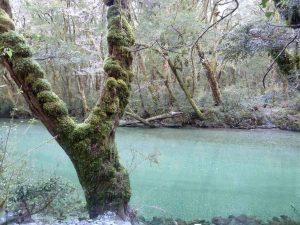 Milford Track Clinton River