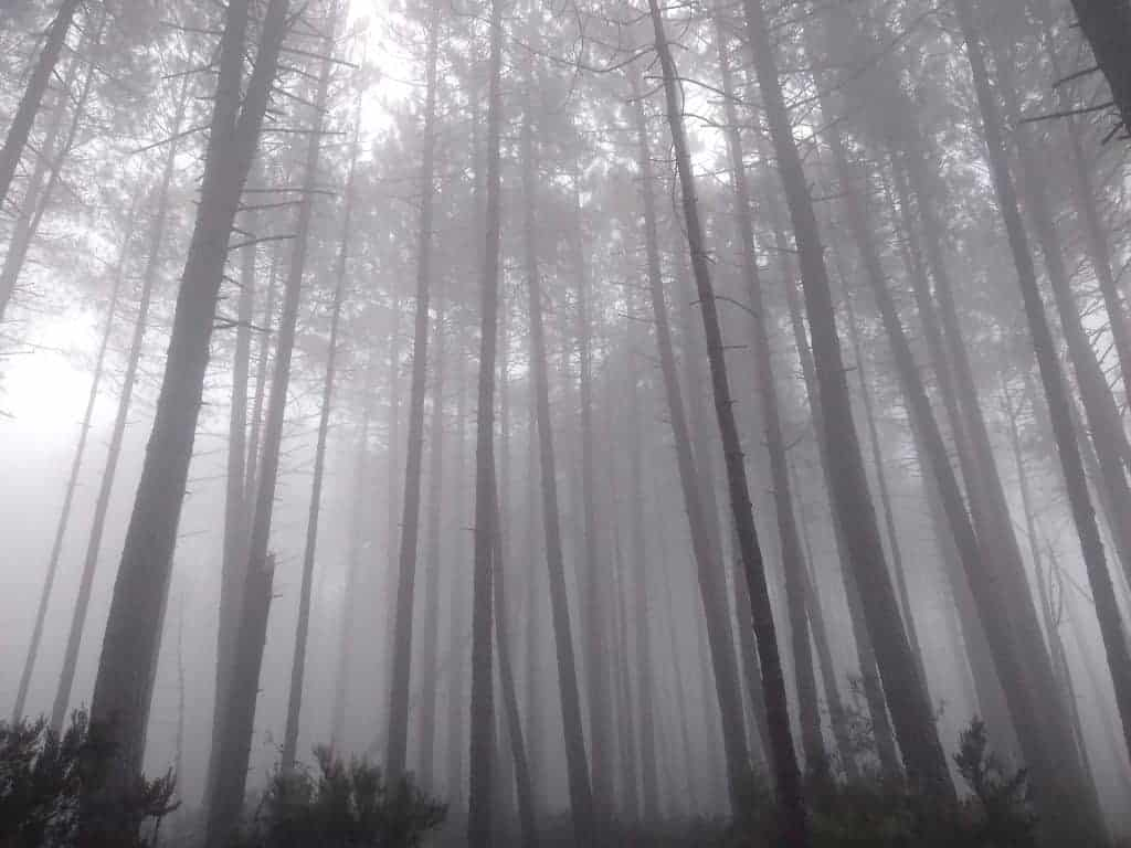 Tall trees surrounded by thick fog on stage 16 of the GR20