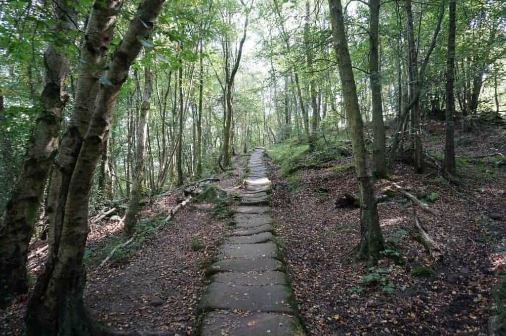 Little Beck Wood, Stage Fourteen Coast to Coast Walk UK