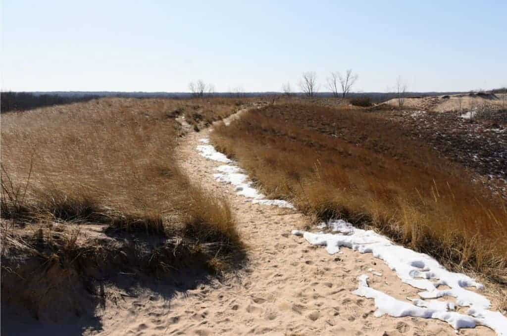 Dunefield in the Indiana Dunes national park.