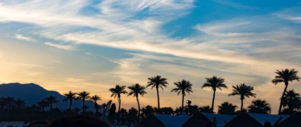 Palm trees in Indio, California.