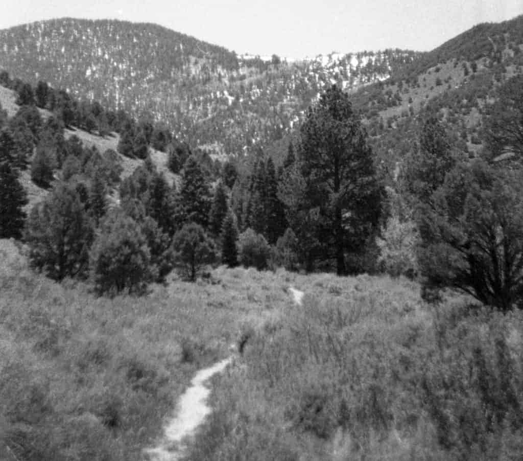 A hiking trail in Great Basin National Park