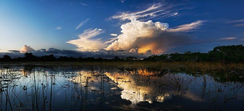 Mangrove in Everglades National Park.