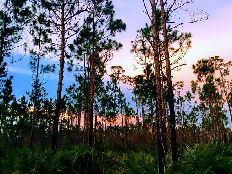 Pinelands in Everglades National Park