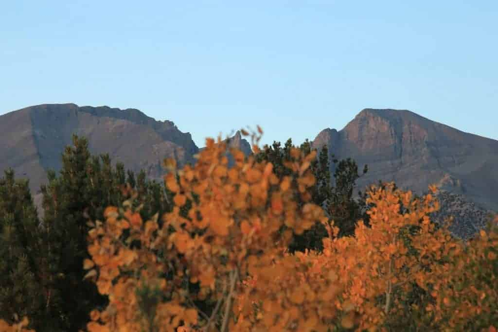 Aspen tree in front of Wheeler Peak in Great Basin National Park.