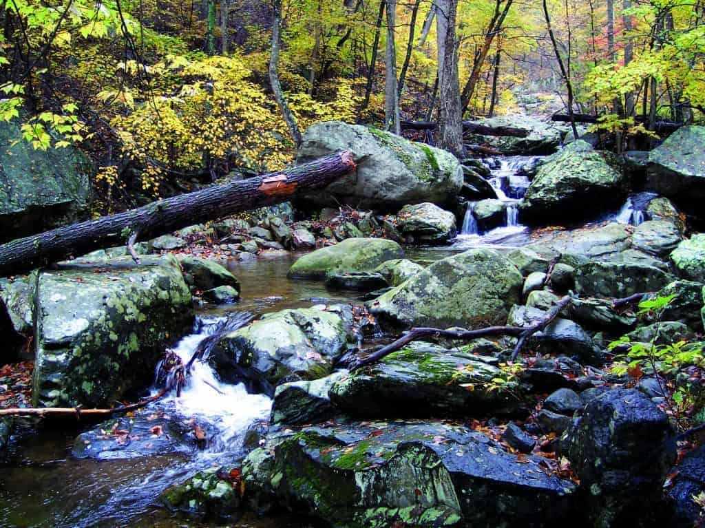 Stream in Whiteoak Canyon, Shenandoah National Park