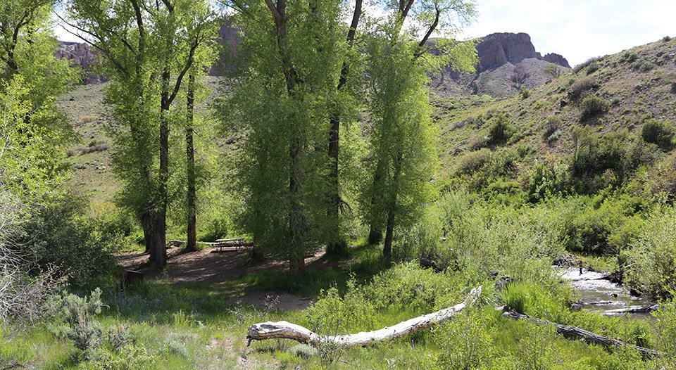 Red Creek Campground, Blue Mesa Reservoir