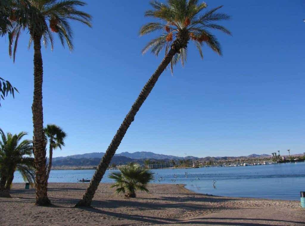 Palm trees on the beach at Lake Havasu