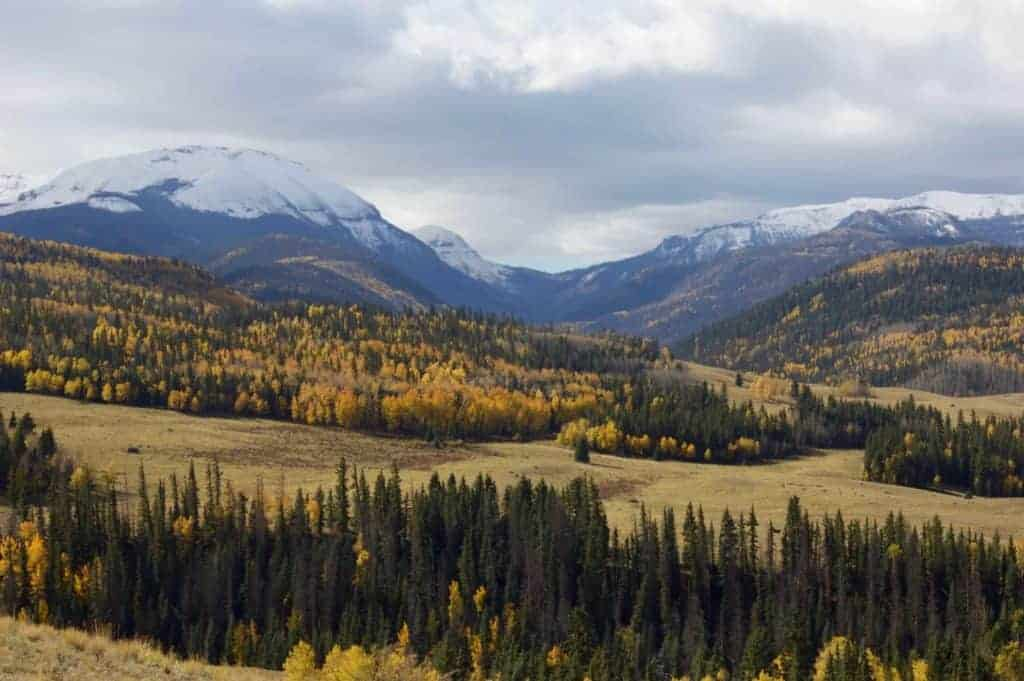 Fall colors seen while dispersed camping near Silverton, CO